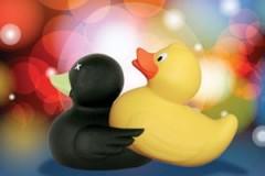 duck-300x200